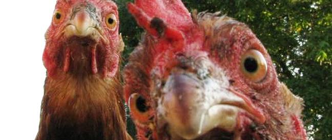 """Rechtsprechung zu """"Fundtieren"""": Tierfunde sind bei der Fundbehörde anzuzeigen"""
