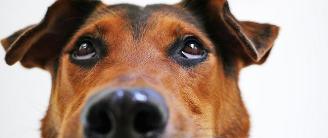 Kastration beim Hund nur nach Einzelfallentscheidung