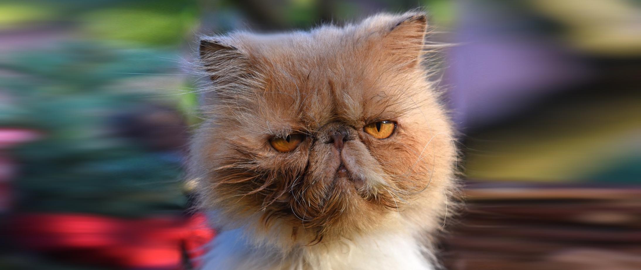 Der Gnadenhof KatzenTRaum braucht Ihre Hilfe