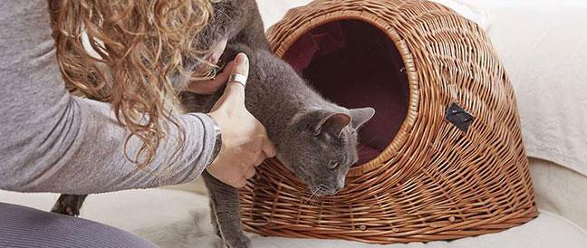 Stressfrei unterwegs mit Katze