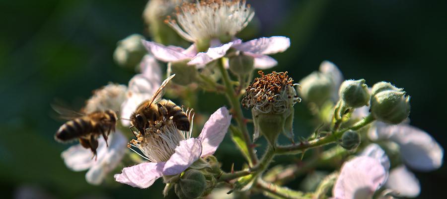 """Volksbegehren """"Artenvielfalt – Rettet die Bienen"""": Chance oder Risiko für Landwirte?"""