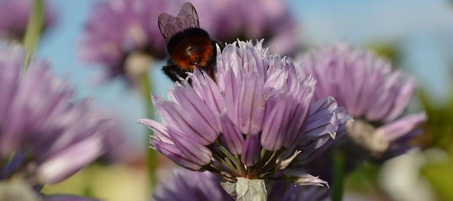 Artenvielfalt im Landkreis Rosenheim