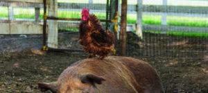Film-Tipp: Unsere große kleine Farm