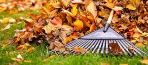 Rechts-Tipp: Auch fürs Herbstlaub gibt's Regeln