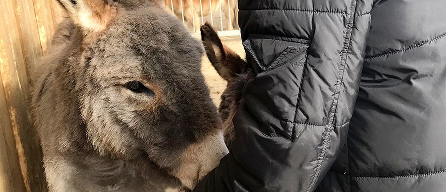 """Herzenswunsch: """"Ich möchte noch einmal Esel streicheln!"""""""