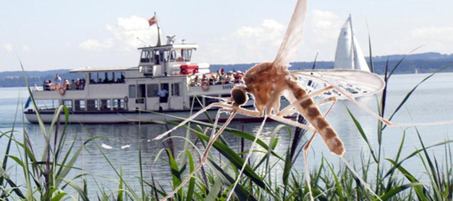 Chiemsee: Alternativen zur Stechmückenbekämpfung gefordert