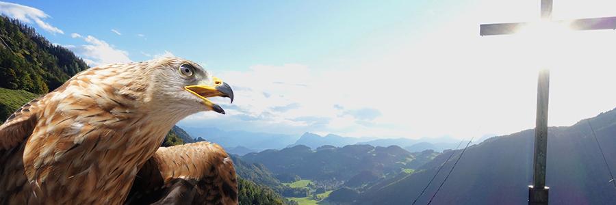 Adler-Beobachtung im Priental: Interessierte für Monitoring gesucht