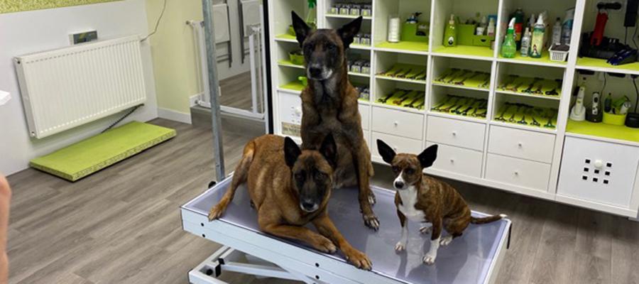 Neueröffnung Dog-Station Hundesalon in Reitmehring – Werbung –