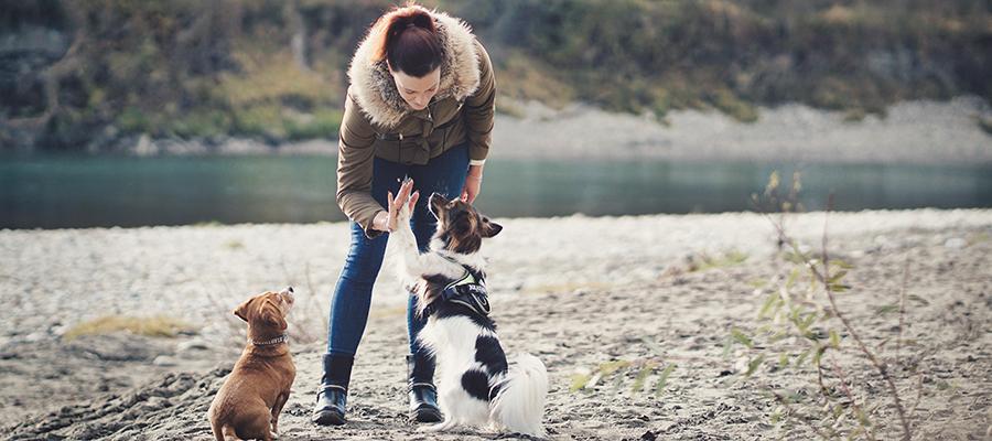 Hundeschule Pfotenbande: Fokus liegt auf Vertrauen- und Bindungsarbeit – Werbung –