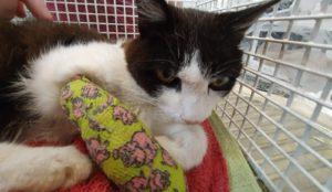 Verletzte Katze in Eggstätt gefunden!